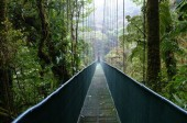 Walking bridge in the Monteverde Cloud Rain Forest, Costa Rica